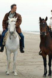 Die Pferdeinsel
