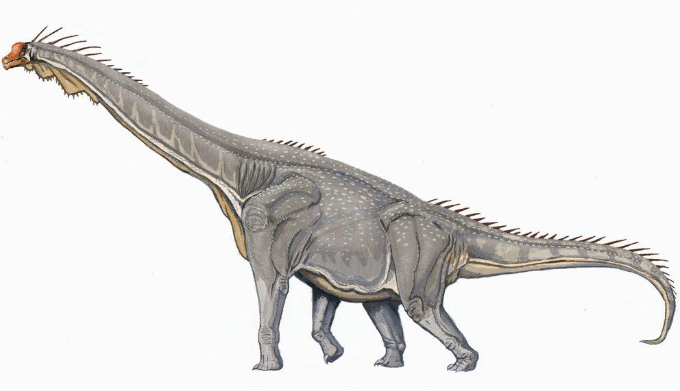 Brachiosaurus_DB