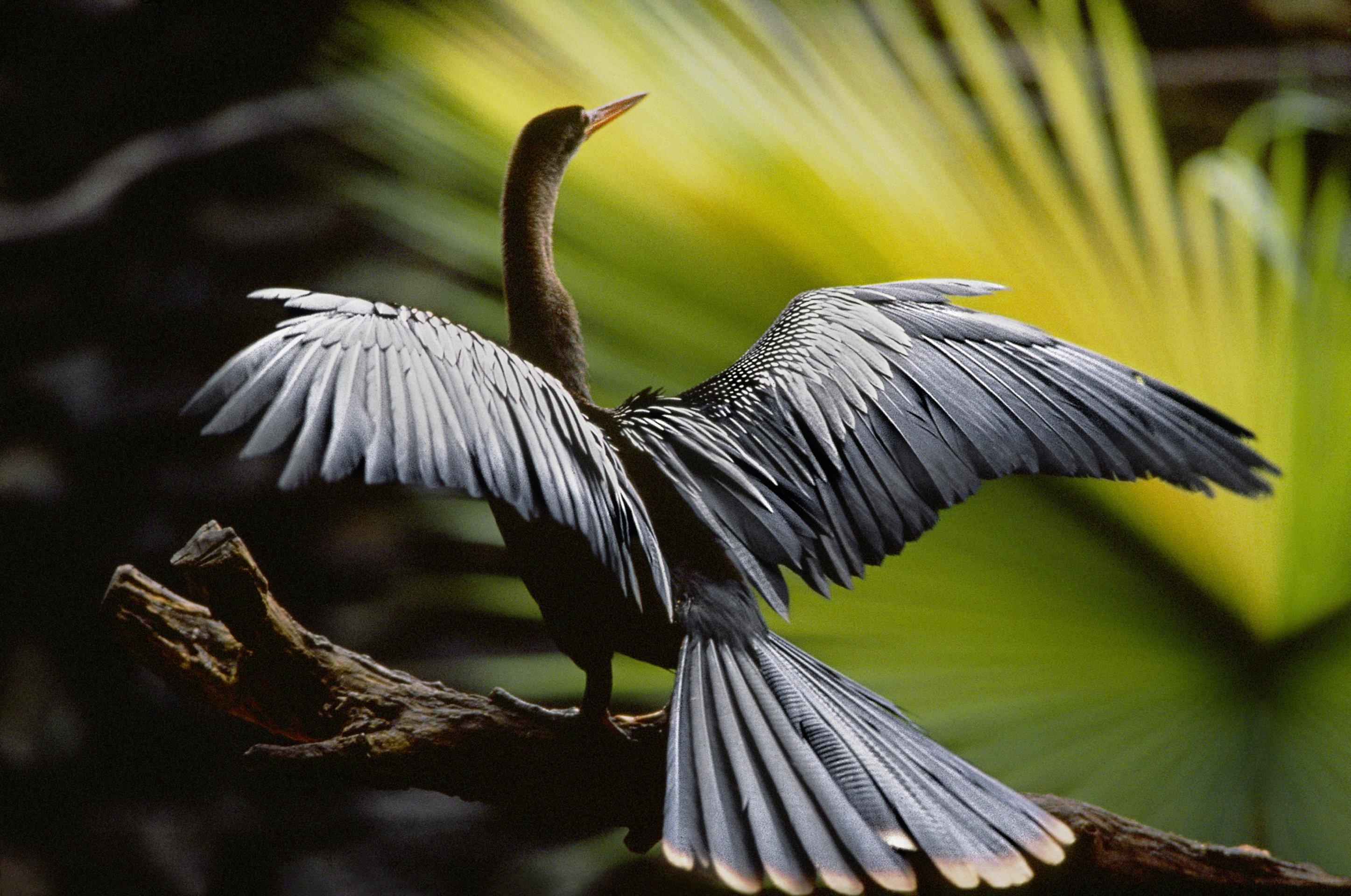 Amazonia Abenteuer Im Regenwald