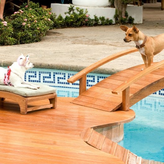 Beverly Hills Chihuahua Poster