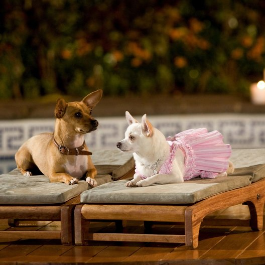 Beverly Hills Chihuahua / Beverly Hills Chihuahua / Beverly Hills Chihuahua 2 / Beverly Hills Chihuahua 3 Poster