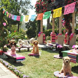Beverly Hills Chihuahua 3: Viva La Fiesta! / Beverly Hills Chihuahua 3 Poster