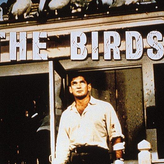Vögel, Die / Rod Taylor Poster