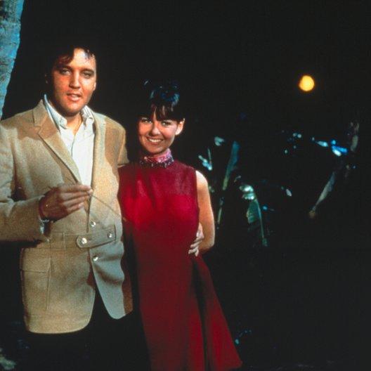 Clambake - Nur nicht Millionär sein / Elvis Presley / Shelley Fabares Poster