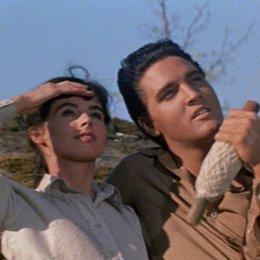 Lied des Rebellen, Das / Millie Perkins / Elvis Presley Poster