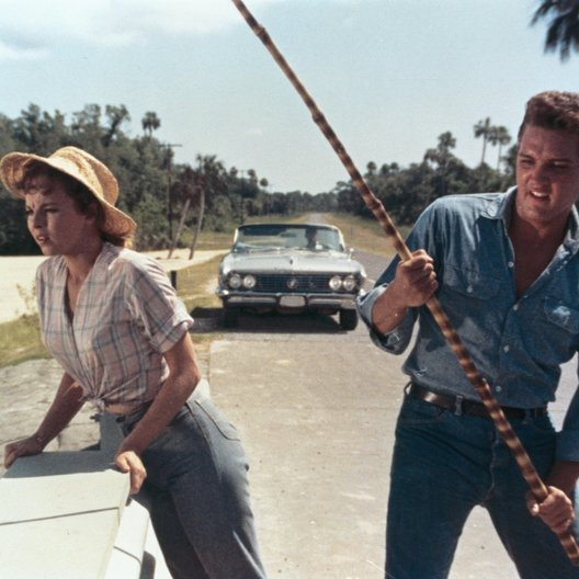 Sommer in Florida, Ein / Anne Helm / Elvis Presley