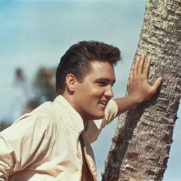 Sommer in Florida, Ein / Elvis Presley Poster