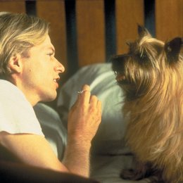 Get the dog - Verrückt nach Liebe / David Spade Poster