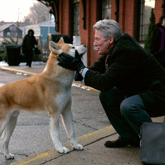 What Kind Of Dog Was Hachi From The Movie