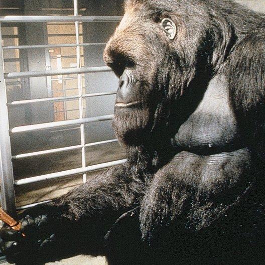 Mein großer Freund Joe / Gorilla Poster