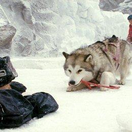 Antarctica - Gefangen im Eis / Antarctica / Bruce Greenwood / Paul Walker Poster