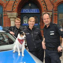 Da kommt Kalle (5. Staffel, 12 Folgen) (ZDF) / Sabine Kaack / Max Woelky / Marek Erhardt Poster