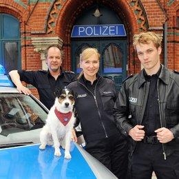 Da kommt Kalle (5. Staffel, 12 Folgen) (ZDF) / Sabine Kaack Poster
