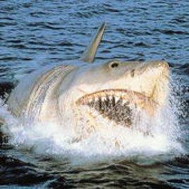 """Comeback für den """"weißen Hai""""?"""