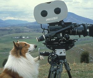 Peter O'Toole kommt auf den Hund