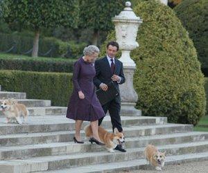"Tier-Oscar für Hunde aus ""The Queen""?"