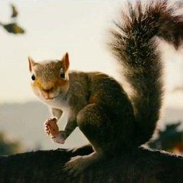 Killer-Eichhörnchen in schrägem Horror-Trailer