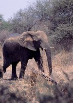 Afrikas faszinierende Tierwelt Poster