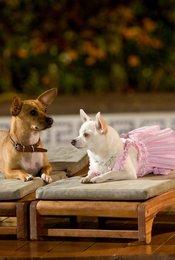 Beverly Hills Chihuahua / Beverly Hills Chihuahua 2 / Beverly Hills Chihuahua 3