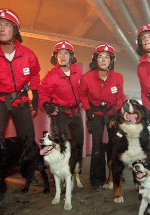 Die Rettungshunde - Hochzeitsreise in den Tod Poster