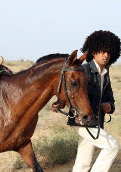 Edles Halbblut - kann man erfolgreiche Pferde züchten? Poster