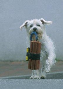 Ein Hund für alle Fälle