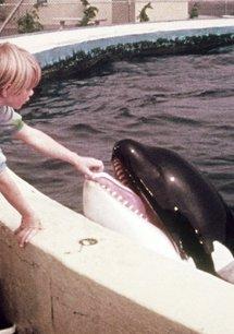 Ferien mit einem Wal