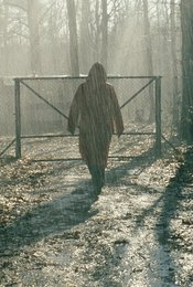 Im Schatten der Wälder