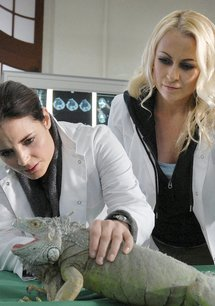 Tierärztin Dr. Mertens (3. Staffel, 13 Folgen)