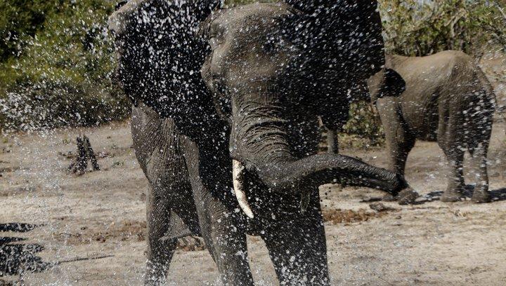 African Safari 3D (VoD-/BluRay-/DVD-Trailer) Poster