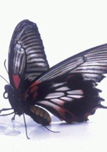 Bugs! - 3D