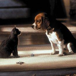 Cats & Dogs - Wie Hund und Katz - Trailer Poster