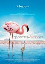 Das Geheimnis der Flamingos Poster