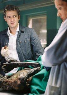 Der Elefant - Mord verjährt nie (2. Staffel, 13 Folgen)