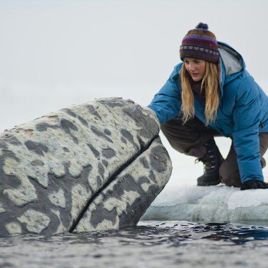 Ruf der Wale - Trailer Poster