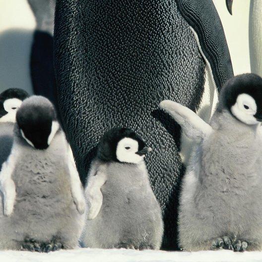 Die Reise der Pinguine - Trailer Poster