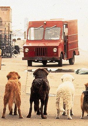 Ein tierisches Trio - wieder unterwegs Poster
