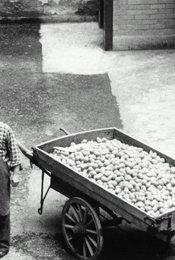 Händler der vier Jahreszeiten