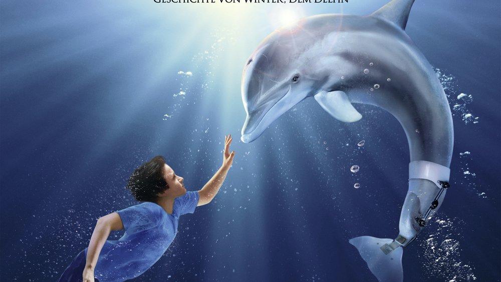"""""""Mein Freund, der Delfin 3 - Kommt eine Fortsetzung"""