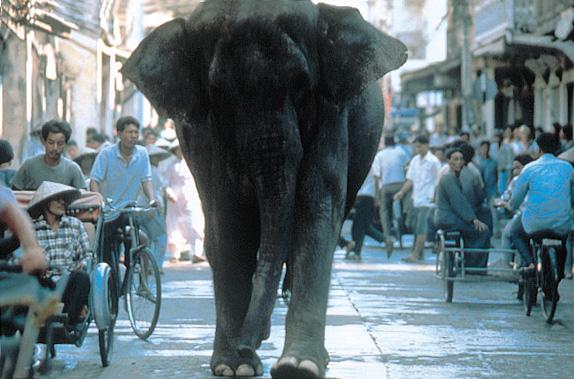 Operation Dumbo