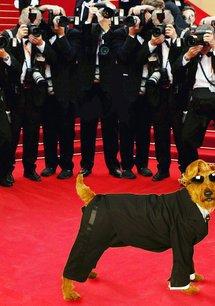 Rexx, der Feuerwehrhund