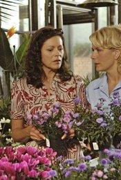 Rote Rosen (01. Staffel, 100 Folgen)