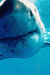 Shark Zone - Tod aus der Tiefe