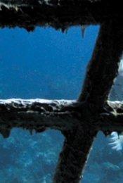 Splash - Die Jungfrau am Haken