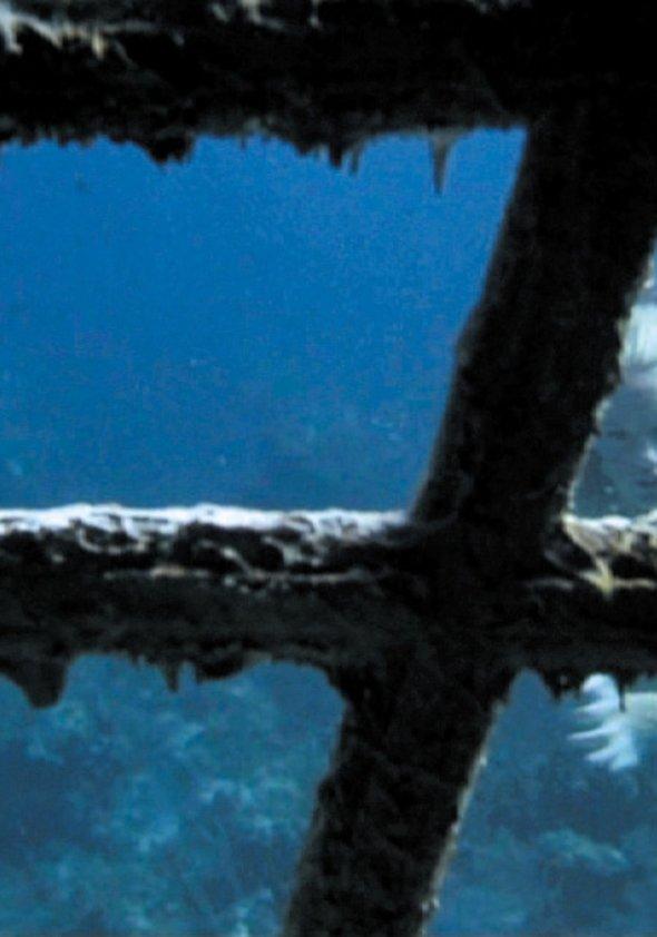 Splash - Die Jungfrau am Haken Poster