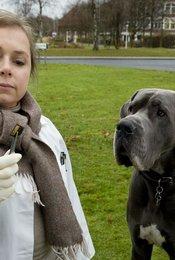 Tatort: Krumme Hunde