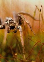 Verborgene Welten - Das geheime Leben der Insekten Poster
