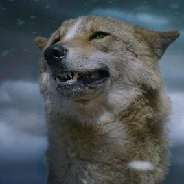 """""""Der letzte Wolf"""": Die natürliche Ordnung zwischen Wolf und Schaf - Exklusiver Clip"""