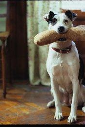 Meine Freundin, ihr Hund und ich