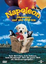 Napoleon - Abenteuer auf vier Pfoten Poster